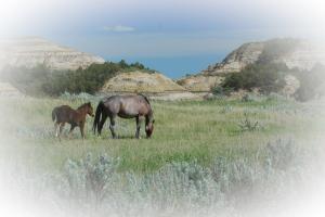 Badlands Horses